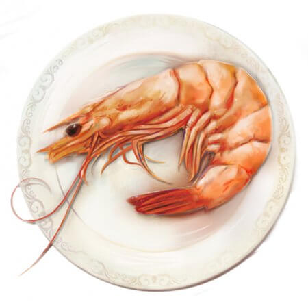 American Shrimp Processors Illustrations